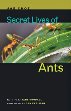 Book - Secret Lives of Ants