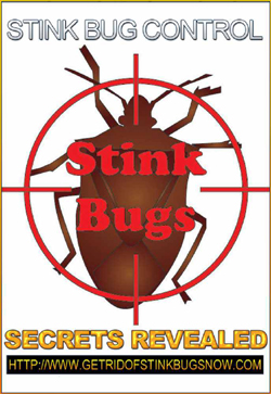 Book - Stink Bug Secrets Revealed